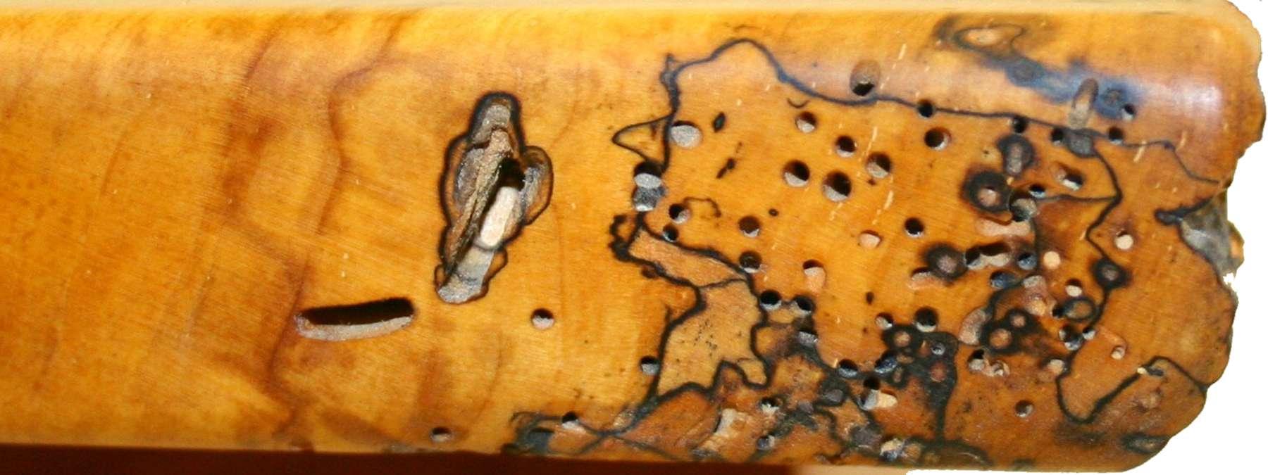 Authentic worm holes